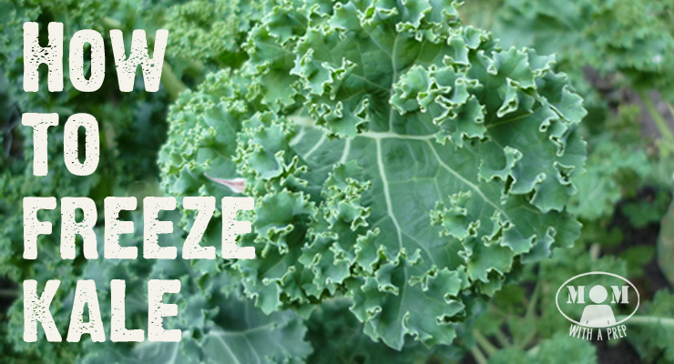 When you have an overabundance of kale from a bumper garden crop or a CSA basket or a great sale at the grocers, what do you do with all that extra kale if you aren't dehydrating it? You can freeze it raw, especially if you're using it for smoothies!