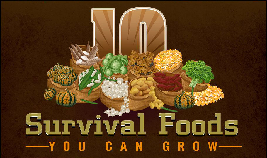 Mom with a PREP | 10 Survival Foods you need to be growing. You can grow many of these vegetables in containers even if you are in a small space, or through vertical gardening projects, etc. #garden #prepare4life #victorygarden