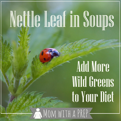 Mom with a PREP | How foraging for Stinging Nettle can add more greens to your diet with this recipe from Mom with a PREP #foraging #soup #nettle