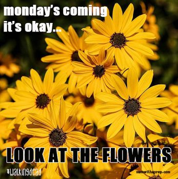 Monday's coming...it's okay...just look at the flowers #walkingdead