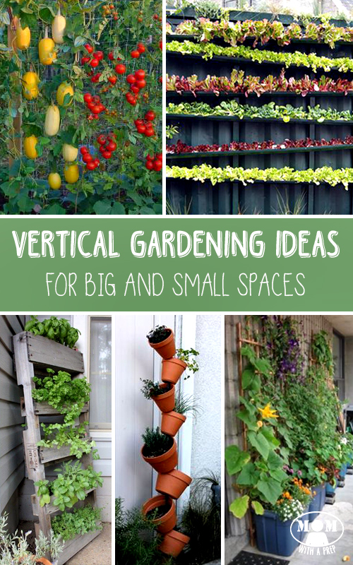 how vertical gardening can help you create a larger crop even in small spaces learn