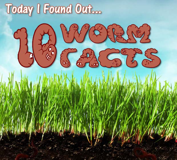 10 Facts I Learned About Earthworms …. the best composter in the garden!