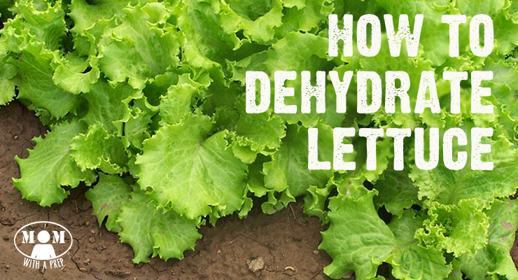 I know..I know...why on earth would anyone want to dehydrate lettuce? My answer? Because I can!