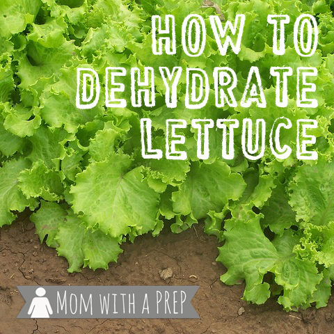 Mom with a PREP | How to Dehydrate Lettuce - Seriously. I know..I know...why on earth would anyone want to dehydrate lettuce? My Answer? Because I can! Find out more here...
