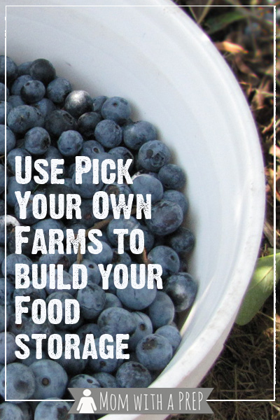 Pick your own farms can give you a chance to stockpile your food storage pantry with fruits and vegetables for a year. Find out how we did it picking blueberries!
