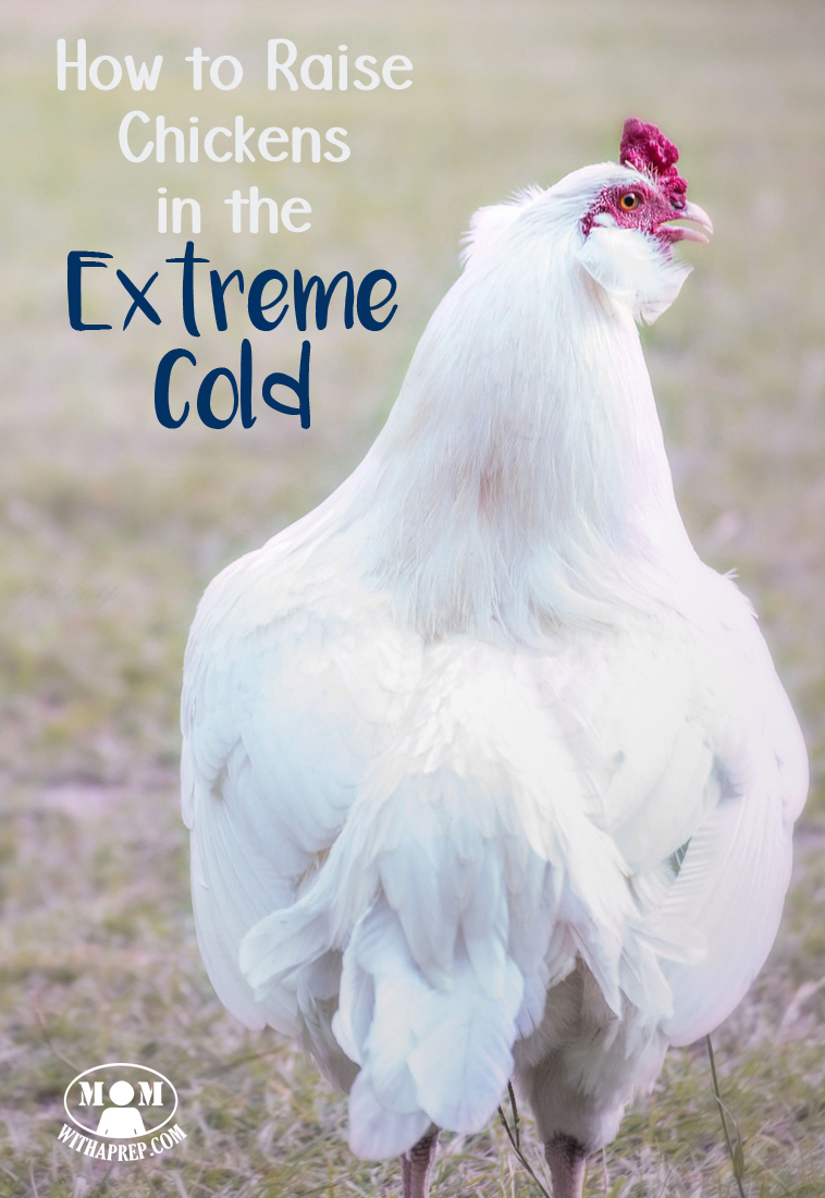 how to care for chickens in the extreme cold mom with a prep