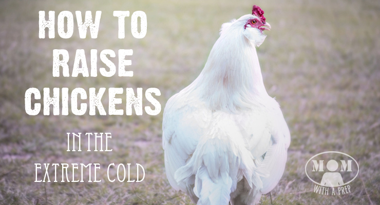 Ever wonder what it's like to raise chickens in Alaska's -70F winters?
