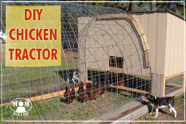 Have dreams of free ranging chickens but still want some place safe for them to be? Do you want to move them around a field or property instead of one space? A DIY Chicken Tractor might be for you!
