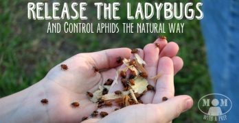 Release the Ladybugs! a Natural Way to Control Aphids in Your Garden