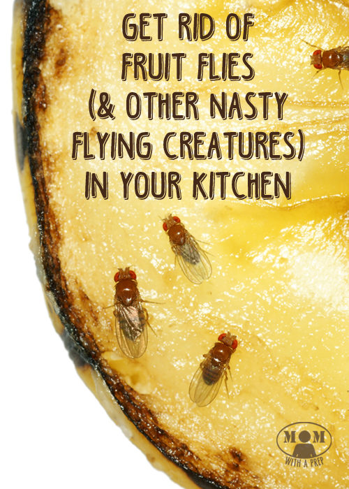 How To Rid Of Annoying Fruit Flies And Gnats In The Kitchen Mom With