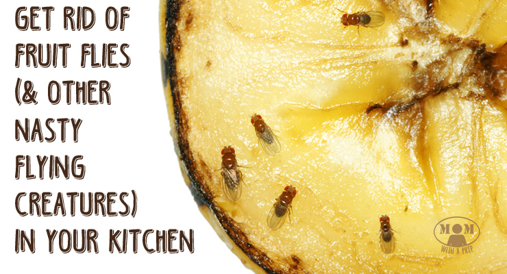 How To Rid Of Annoying Fruit Flies And Gnats In The Kitchen