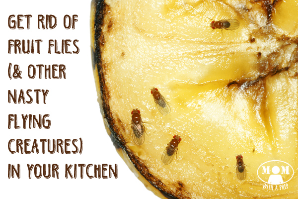 How To Rid Of Annoying Fruit Flies And Gnats In The