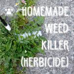 Do you have weeds growing in your driveaway or along your sidewalks that you just hate? Here's a natural, homemade weed killer that will help you do it without the harmful chemicals of the commercial stuff you get at the store.