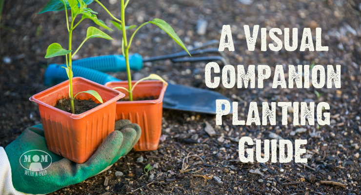 Companion Plant Visual Chart For Your Garden  Mom With A Prep