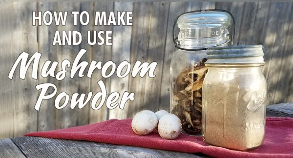 Mushroom Powder and how to use it | dehydrate mushrooms | use mushroom powder | what is mushroom powder | store mushroom powder