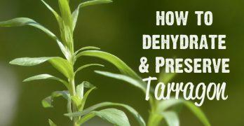 Dehydrate Tarragon | Freeze Tarragon | Preserve Tarragon | How to Dehydrate Tarragon