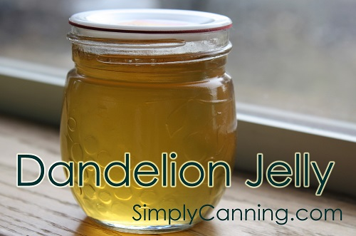 30+ Incredible Ways to Use Dandelions in Food Storage and more - Dandelion Jelly from Simply Canning
