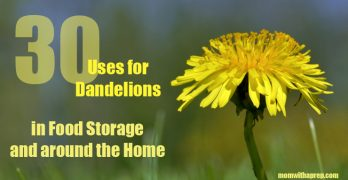 30+ Incredible Uses for Dandelions in Food Storage and more