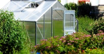 Attached Greenhouse Garden made of Glass on a Backyard with Flowers and Green Plants on the side