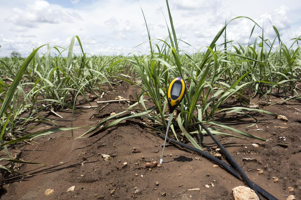 using a soil ph tester on crops