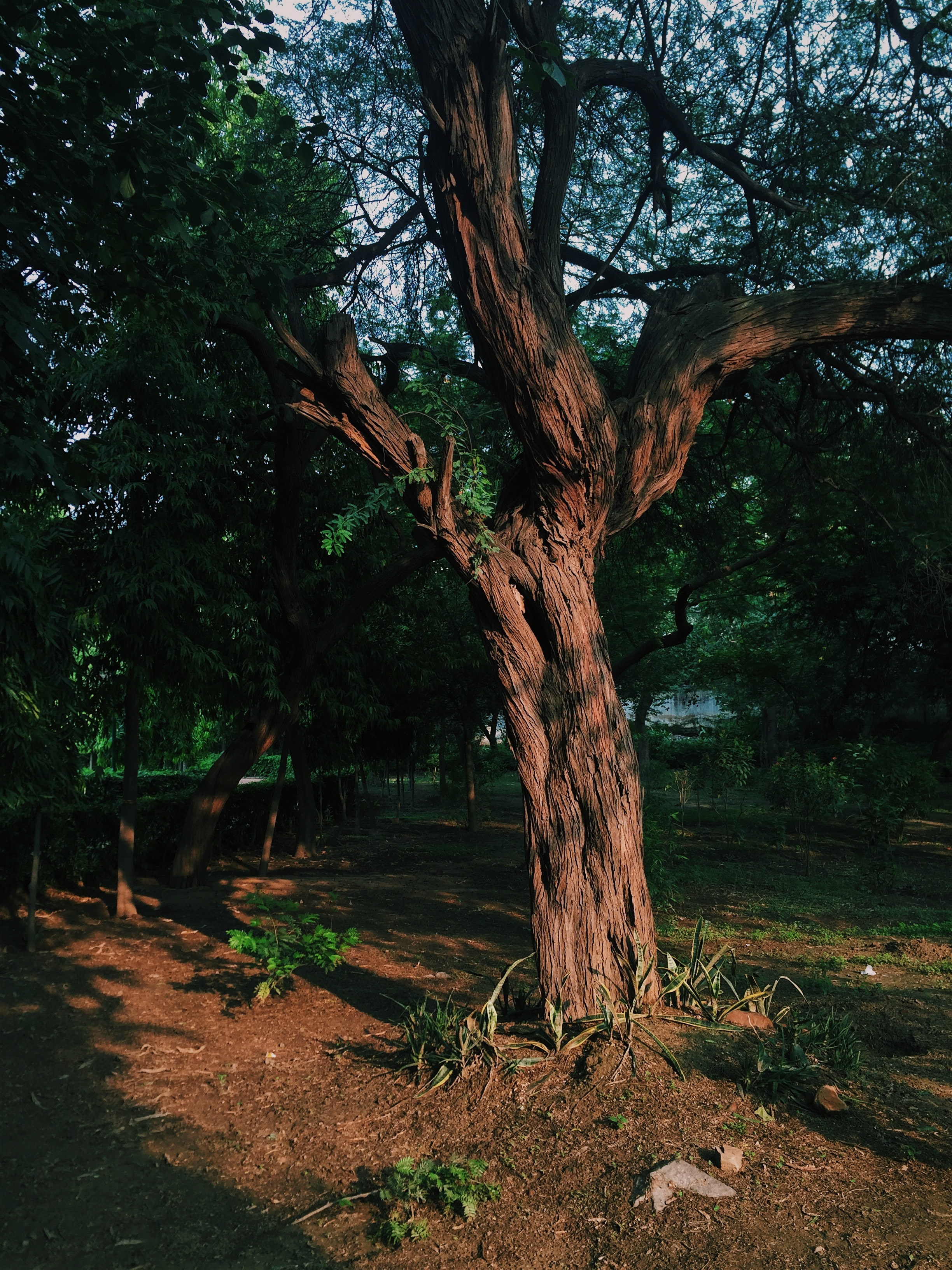 a tall beautiful tree