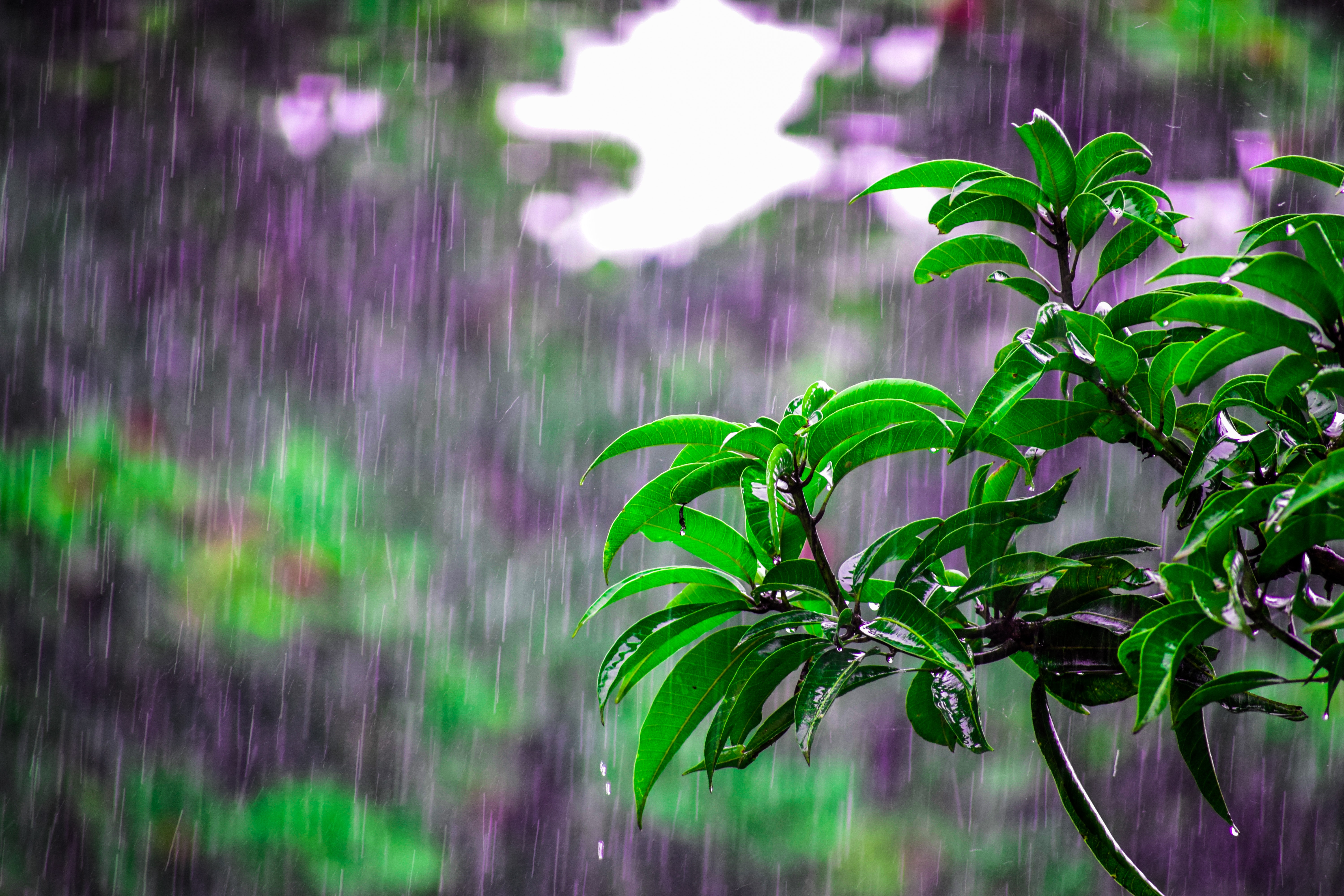pouring rain and a plant