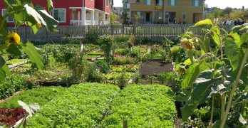 clean and beautiful community garden with different type of produce