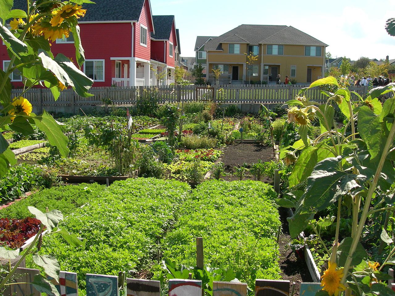 a community garden with different produce