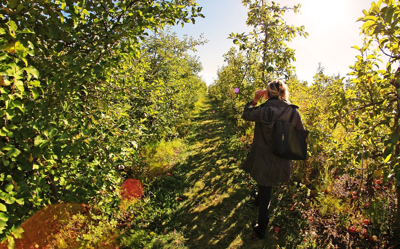 a woman walking around in an apple farm
